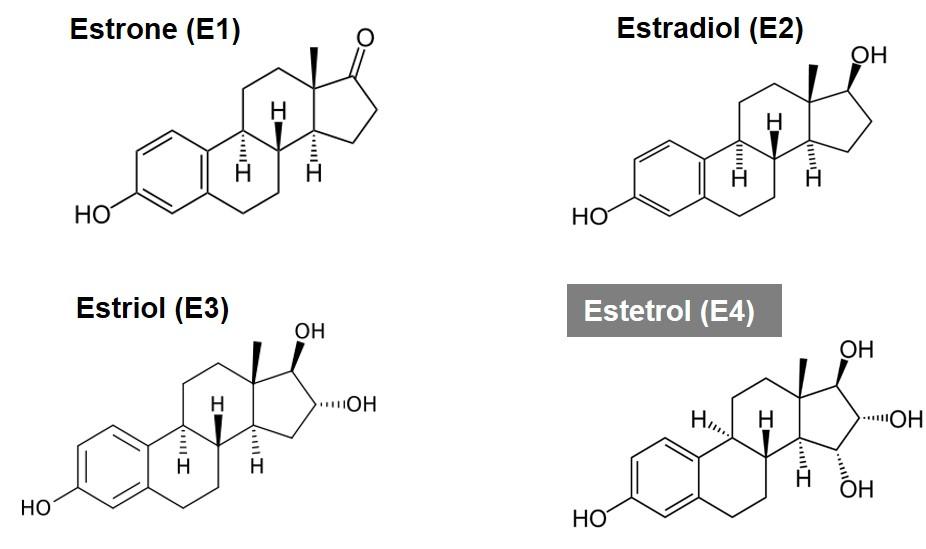Figure 1 The four natural estrogens